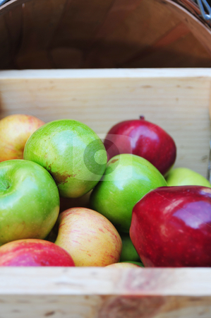 Apple Crate And Apples stock photo, A wooden crate containg three different kinds of apples, Pippen, Red Delicious and Fuji. by Lynn Bendickson