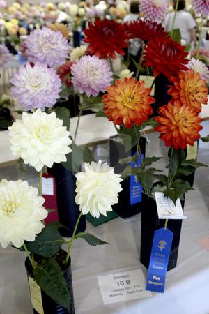 The Dahlia flower show