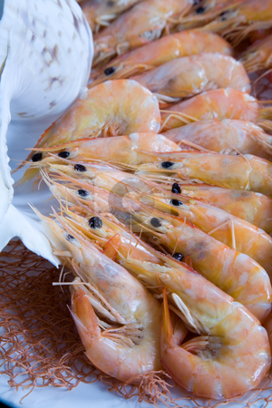 Shrimp and shell stock photo, Shrimps and one shell by Paulo Resende