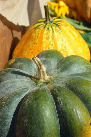 Fancy pumpkins stock photo, Fancy pumpkins on a peasant market under the sunlight by Natalia Macheda