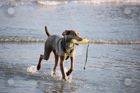 Dog On The Beach stock photo,  by Liane Harrold