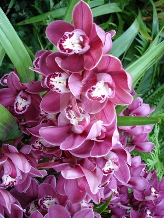 Orchid Flowers stock photo,  by Ritu Jethani