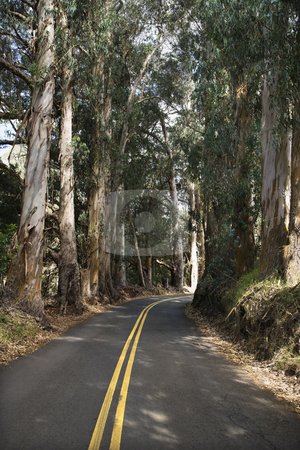 Scenic road. stock photo, Road through scenic forest. by Iofoto Images