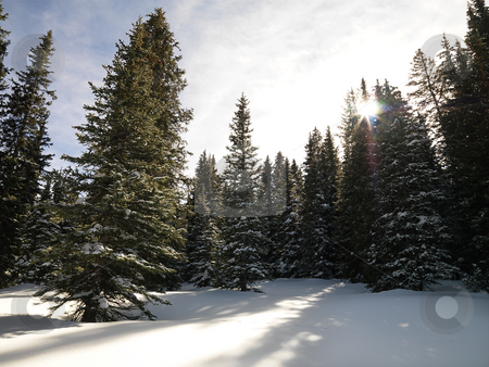 Snowy forest. stock photo, Snowy landscape with trees. by Iofoto Images