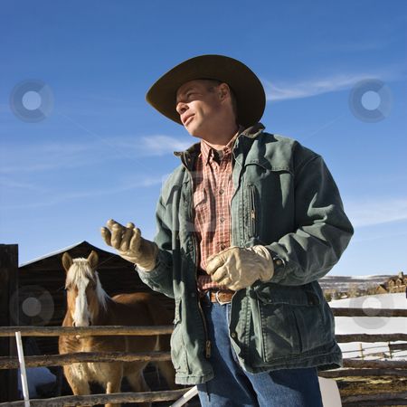 Wrangler talking. stock photo, Middle-aged Caucasian male wrangler with horse in background. by Iofoto Images