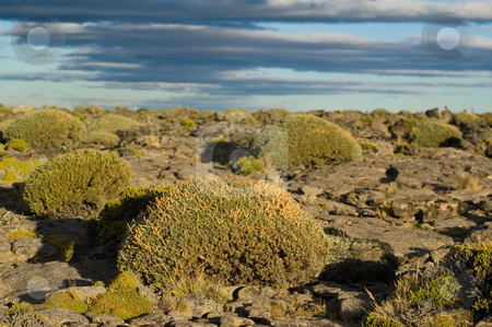 Bushes in the patagonian steppe stock photo, Bushes in the patagonian steppe, southern Argentina. by Pablo Caridad