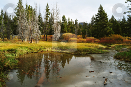 High Sierra Meadow In Autumn stock photo, Fall arrives to a meadow in Alpine Country California by Lynn Bendickson