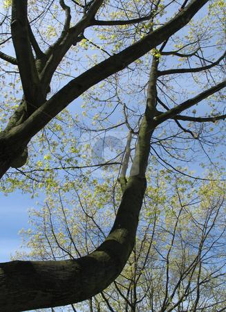 Massive tree and blue sky