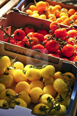 Tomatoes on the market stock photo, Colorful tomatoes for sale on farmer's market by Elena Elisseeva