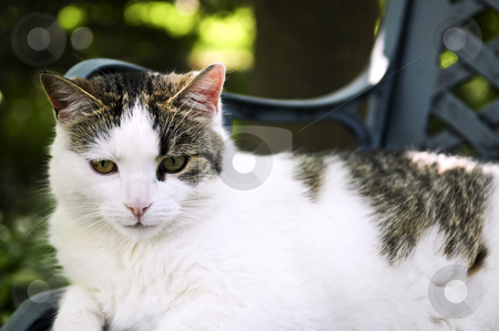 Cat stock photo, Cat sitting on a garden bench close up by Elena Elisseeva
