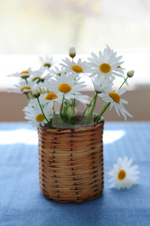 Morning daisies stock photo, Small bouquet of summer daisies in the morning by Elena Elisseeva