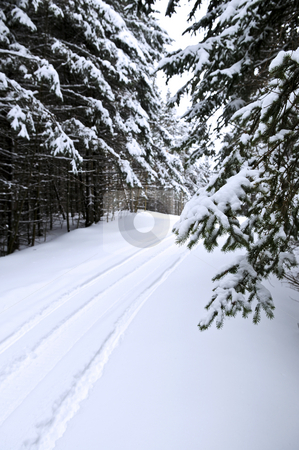 Winter landscape stock photo, Winter landscape with snowy trees and snowmobile path by Elena Elisseeva