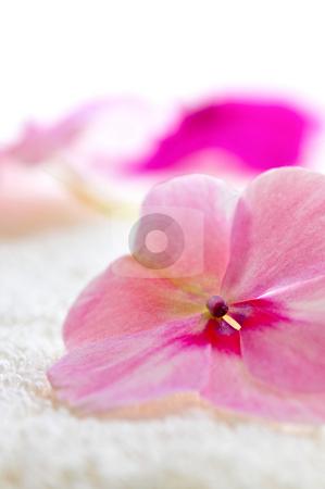 Gentle flower on luxury towel stock photo, Gentle fresh flower on luxury towel close up by Elena Elisseeva