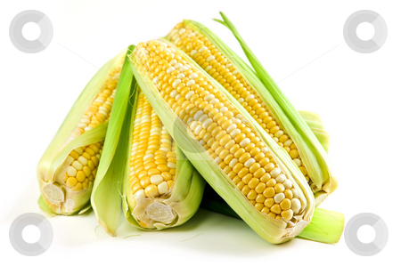 Corn ears on white background stock photo, Ears of fresh corn isolated on white background by Elena Elisseeva