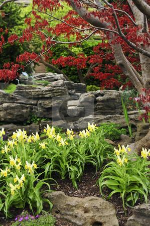 Zen garden stock photo, Zen garden with natural stone and japanese maple by Elena Elisseeva