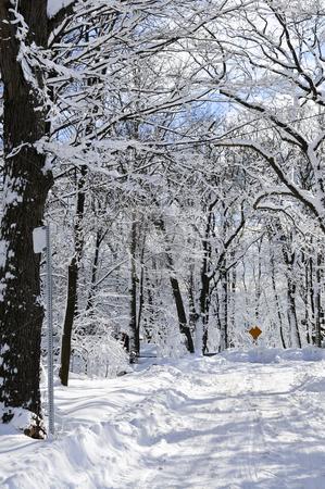 Winter street stock photo, Winter street with lots of snow in Toronto by Elena Elisseeva