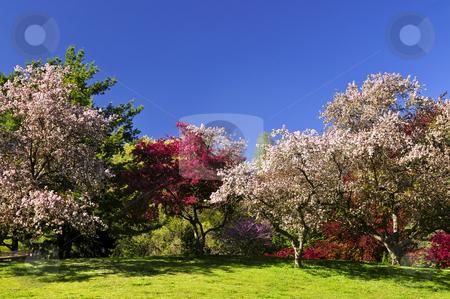 Blooming fruit trees in spring park stock photo, Landscape of blooming fruit trees in spring park by Elena Elisseeva