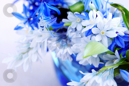 First spring flowers stock photo, Blue bouquet of first spring flowers closeup by Elena Elisseeva