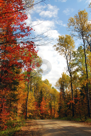 Forest road stock photo, Forest road in the fall by Elena Elisseeva