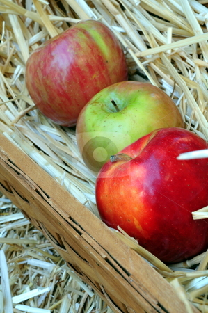 Apple Harvest stock photo, Apples And Straw In A Basket by Lynn Bendickson