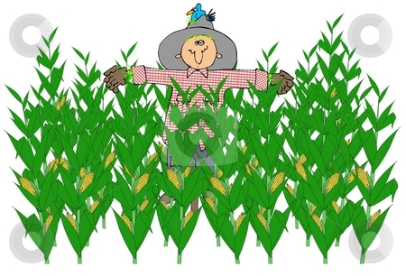Scarecrow In A Corn Field stock photo, This illustration depicts a scarecrow in the middle of a corn field. by Dennis Cox