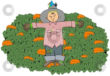 Scarecrow In A Pumpkin Patch stock photo, This illustration depicts a scarecrow in the middle of a pumpkin patch. by Dennis Cox