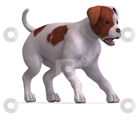 Cute puppy parson stock photo, Very cute young dog over white with Clipping Path by Ralf Kraft