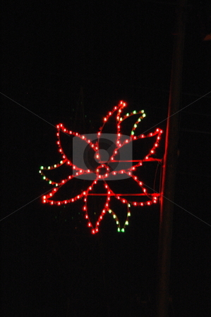 A city lightpole Christmas Decoration. stock photo, A poinsetta flower is made with colored lights on a City lightpole as a Christmas decoration. by Janie Mertz