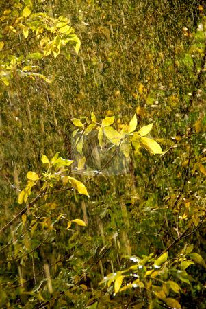 Rain and sun stock photo, Rain and sunshine - falling raindrops sparkling by Elena Elisseeva