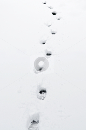 Footprints in snow stock photo, Footprints in fresh pristine snow close up by Elena Elisseeva