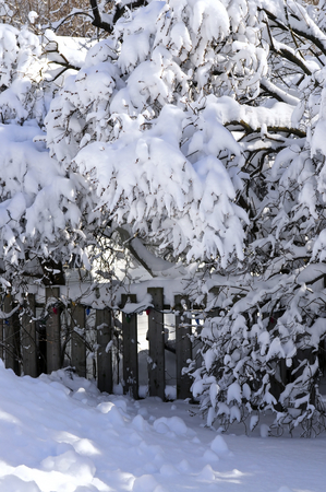 House fence in winter stock photo, House yard fence and trees covered with heavy snow in winter Toronto by Elena Elisseeva