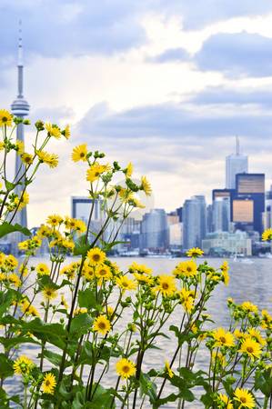 Toronto skyline stock photo, Toronto city waterfront skyline with yellow flowers in foreground by Elena Elisseeva