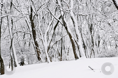Winter park landscape stock photo, Winter park landscape with snow covered trees by Elena Elisseeva
