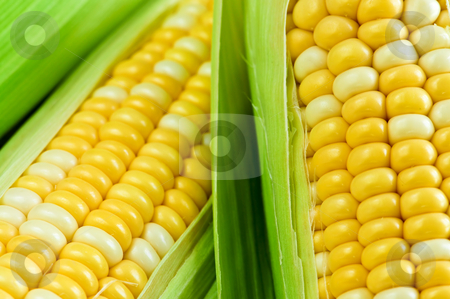 Corn close up stock photo, Ears of fresh corn with husks close up by Elena Elisseeva