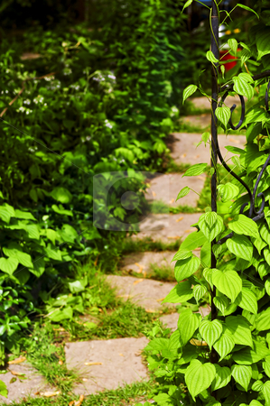 Vine on wrought iron arbor stock photo, Closeup on green yam vine climbing on wrought iron arbor by Elena Elisseeva