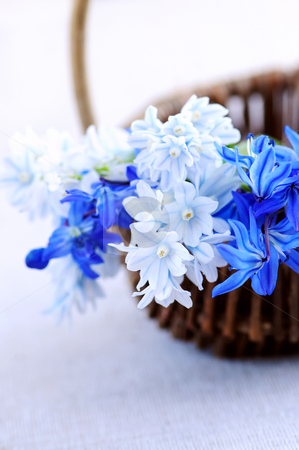 First spring flowers stock photo, Blue bouquet of first spring flowers in a basket closeup by Elena Elisseeva