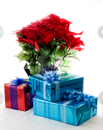 Poinsettia plant and Christmas gifts stock photo, Gifts placed in front of Poinsettia plant by RCarner Photography