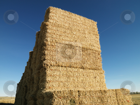 Bales of hay. stock photo, Tall stack of bales of hay in rural setting. by Iofoto Images