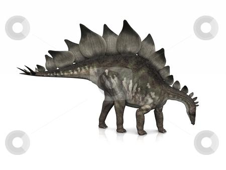 Stegosaurus stock photo, A Stegosaurus poses on a slightly reflective floor. by Allan Tooley