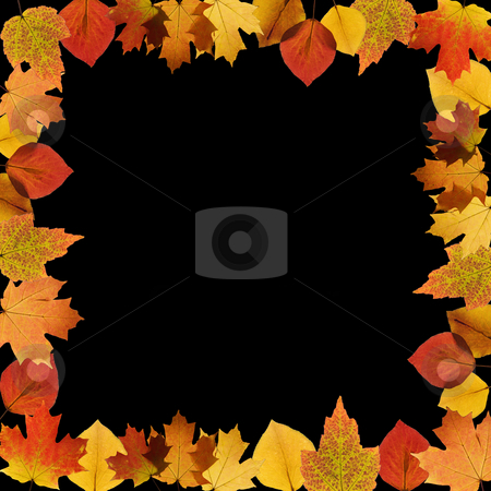Autumn frame stock photo, Frame composed of Sugar Maple leaves on black background. by Iofoto Images