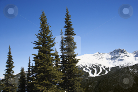 Scenic of mountain ski trails. stock photo, Scenic of pine trees and mountain ski trails. by Iofoto Images