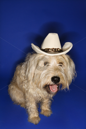 Dog wearing cowboy hat. stock photo, Fluffy brown dog wearing cowboy hat. by Iofoto Images