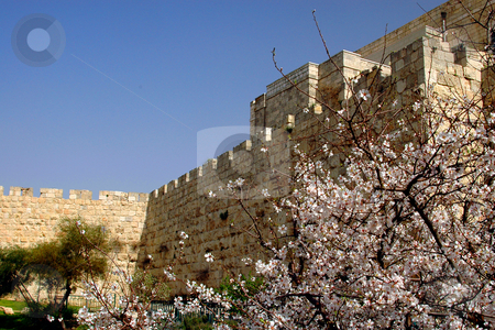 Spring In Jerusalem stock photo, Jerusalem old city exterior wall on spring by Kobby Dagan