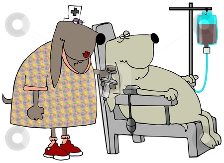 Blood Hounds stock photo, This illustration depicts a patient dog having its blood taken by a nurse canine. by Dennis Cox