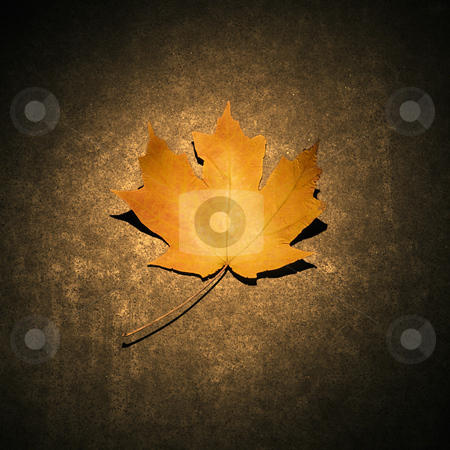 Yellow maple leaf. stock photo, Single orange Maple leaf spotlighted against concrete background. by Iofoto Images