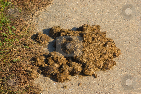Mist - Dung stock photo, Am Stra?enrand - On a street border by Wolfgang Heidasch