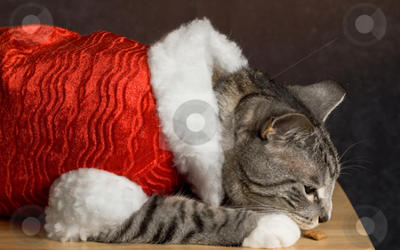Santa Cat stock photo, Santa cat enjoying his treats on a table by Richard Nelson