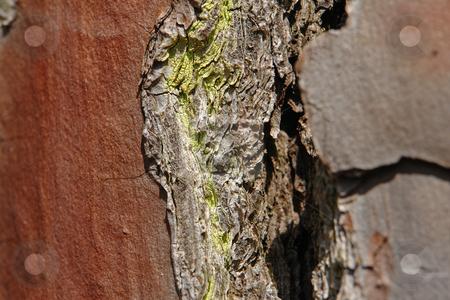Pinienrinde stock photo, Pinienrinde by Wolfgang Heidasch