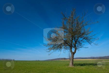 Wiese mit Baum stock photo, Wiese mit Baum by Wolfgang Heidasch