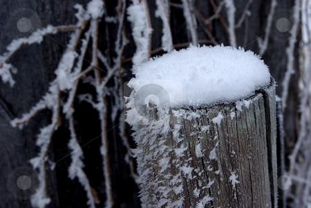 Frost covered stock photo, Frost decorates a fence post and vine covered fence on a late winter morning. by Dennis Thomsen